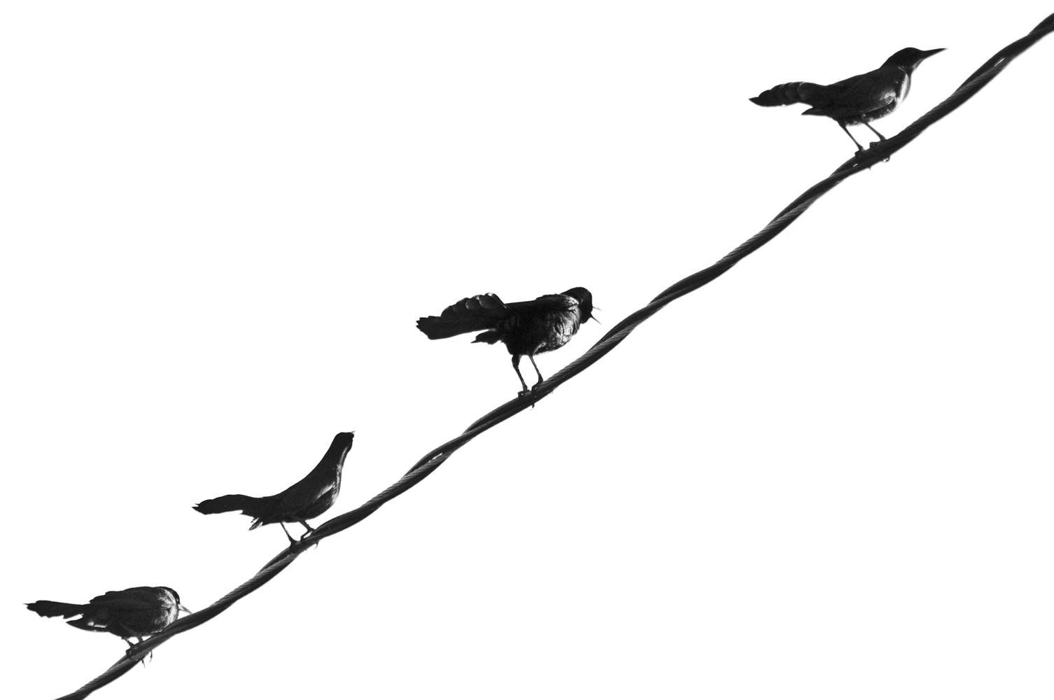 6 Pics On Wire Black Bird Center Crochetcircularedgepatterndiagram Birds A Lonely Personal And Travel Photography By Rh Grizzleemartin Com Silhouette Movie